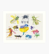 Wild Bees Illustration | Apidae Watercolor / Aquarelle Painting Art Print
