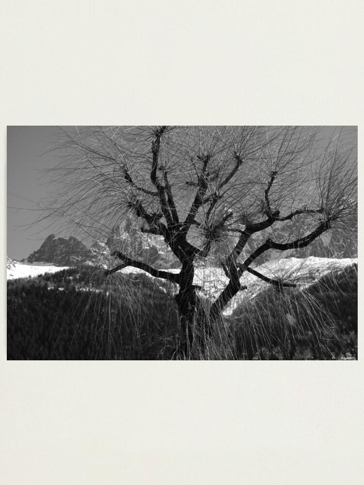 Alternate view of Chamonix Tree Photographic Print