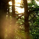 Camp Shine 2 by mooner1