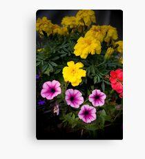 Garden of Colour Canvas Print