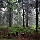 forest by danapace