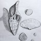 Sea Shells Pencil Drawing by Sandra Connelly