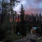 Of Pine Beetles and Forest Fires by CSDesigns