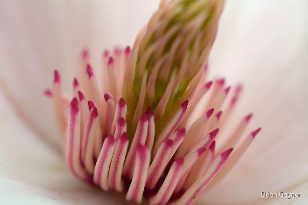 Inside the Magnolia by Brian Gaynor