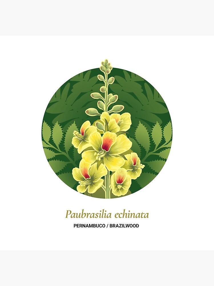 The Circles of Life: Pernambuco / Brazilwood by franzanth