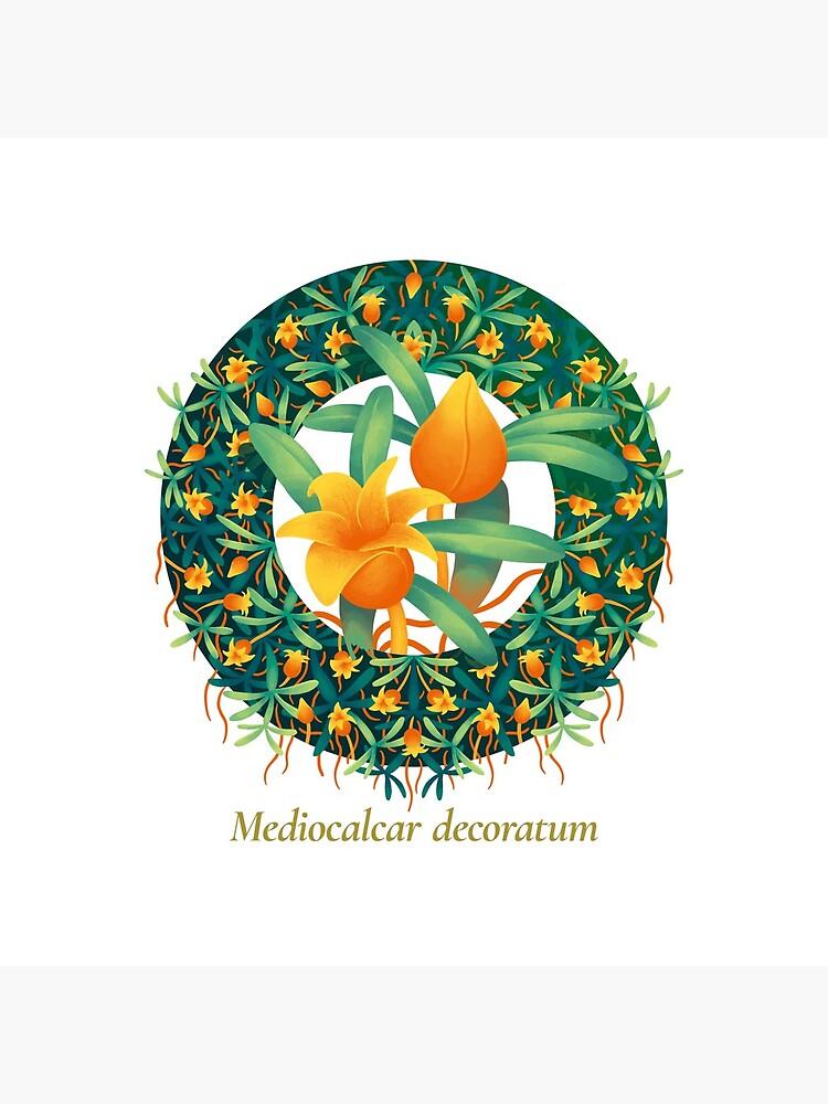 The Circles of Life: Mediocalcar decoratum by franzanth
