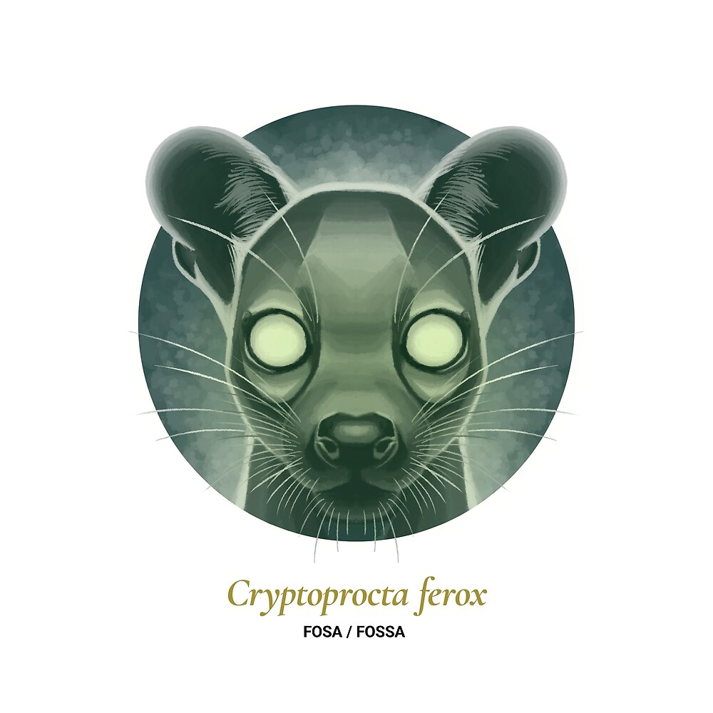 The Circles of Life: Fosa / Fossa by Franz Anthony