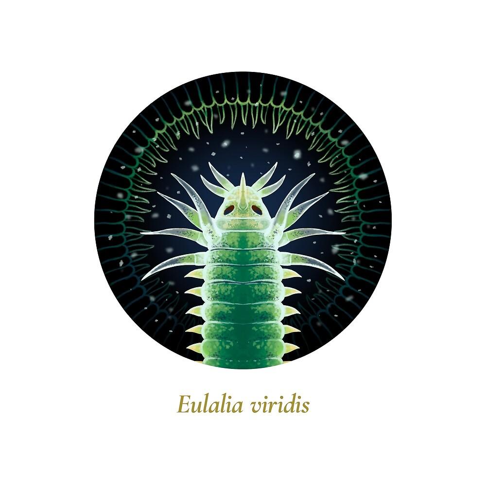 The Circles of Life: Eulalia viridis by Franz Anthony
