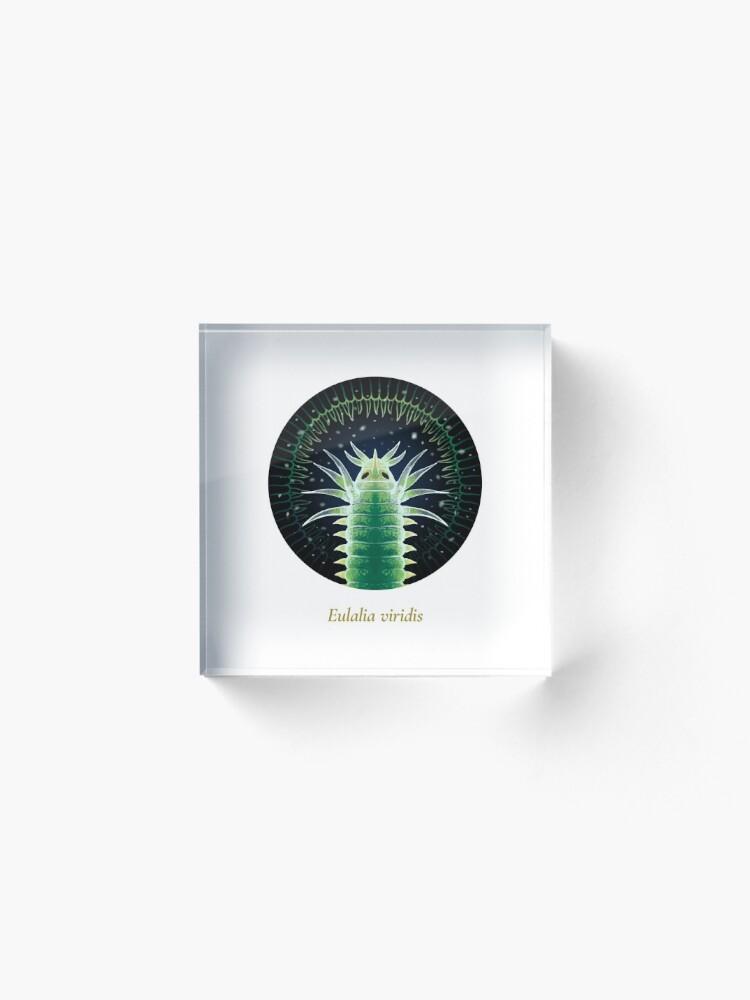 Alternate view of The Circles of Life: Eulalia viridis Acrylic Block