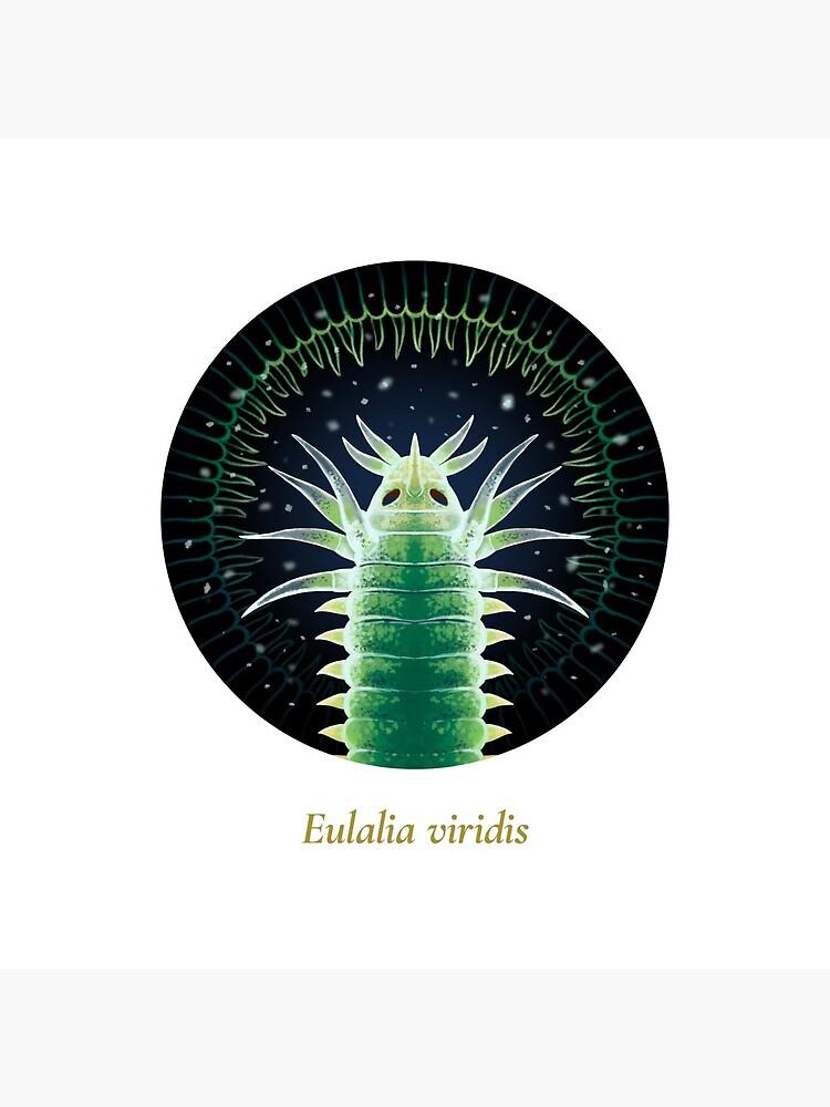 The Circles of Life: Eulalia viridis by franzanth