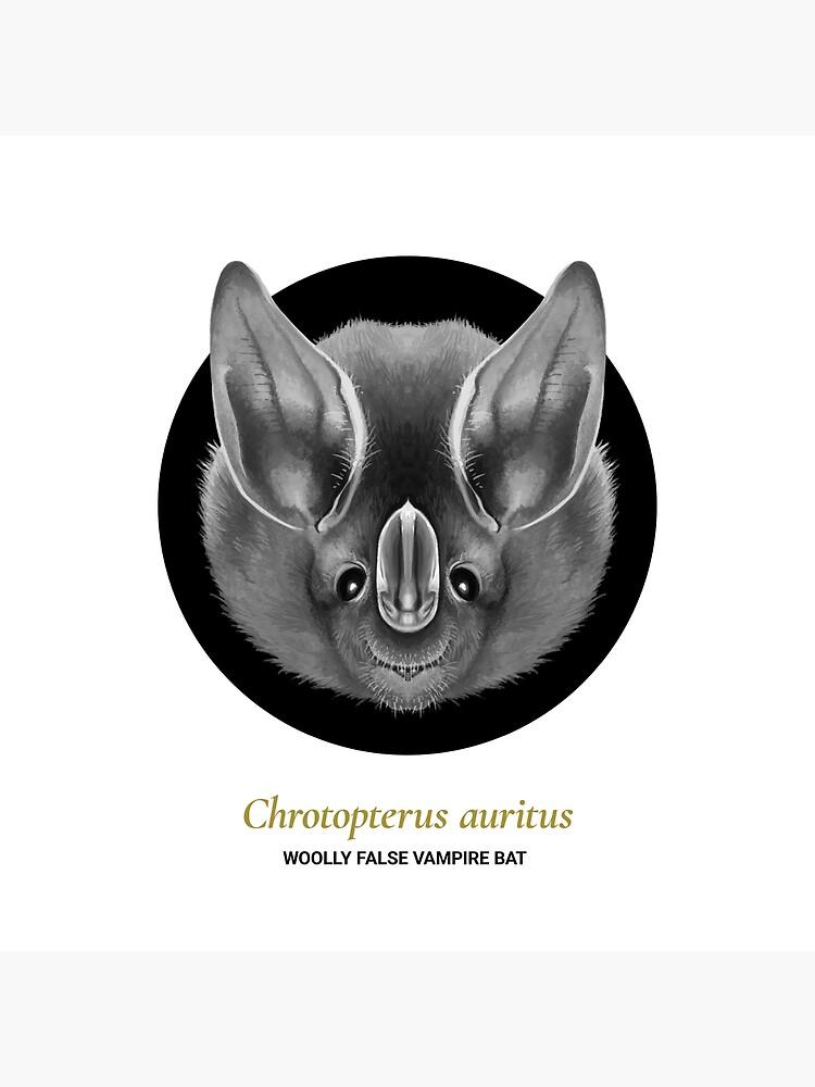 The Circles of Life: Wooly False Vampire Bat by franzanth