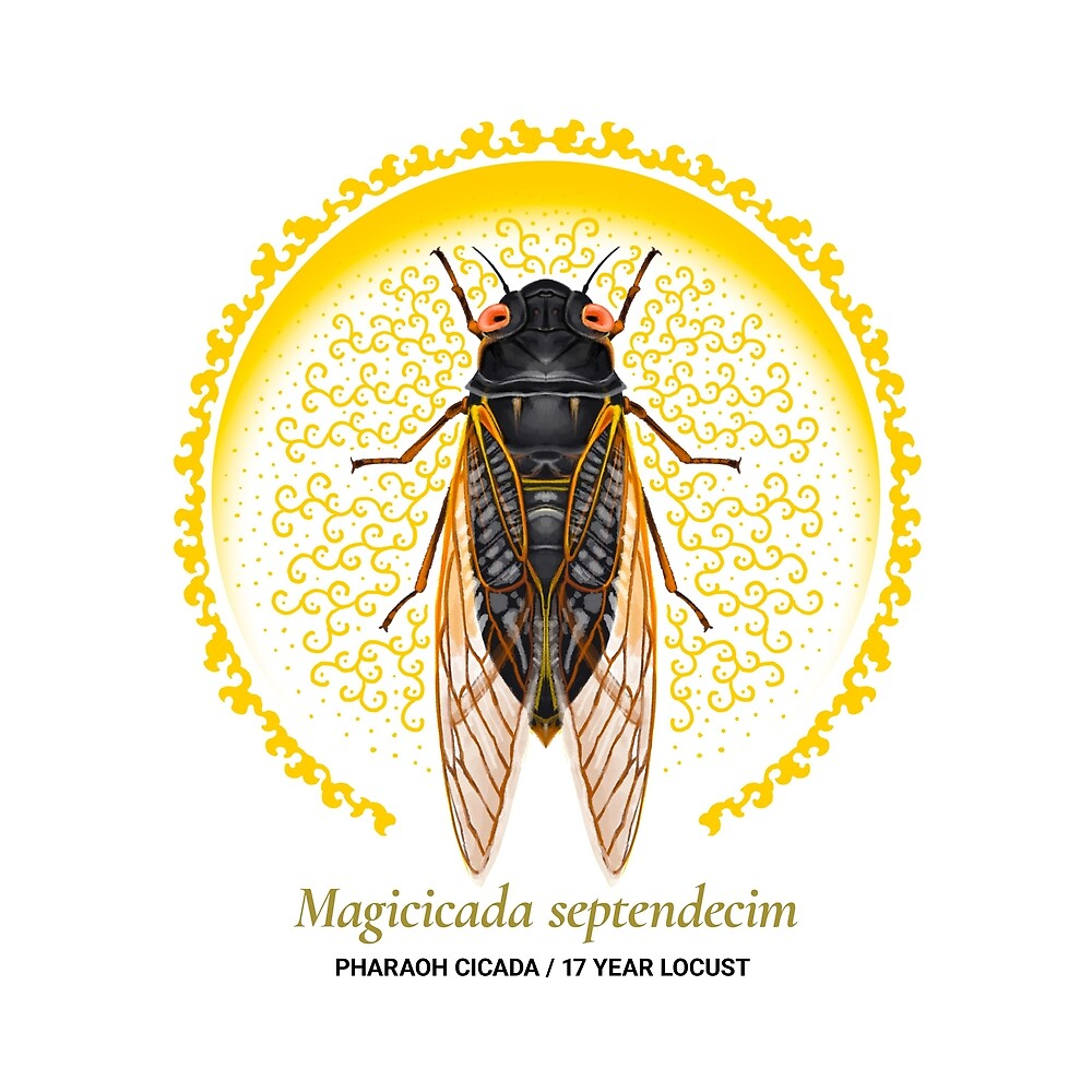 The Circles of Life: Pharaoh Cicada / 17 Year Locust by Franz Anthony