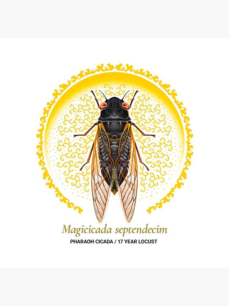 The Circles of Life: Pharaoh Cicada / 17 Year Locust by franzanth