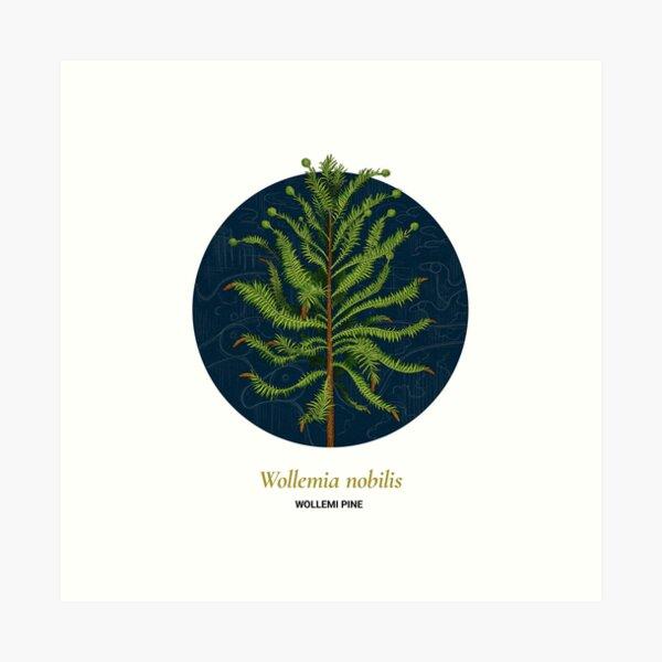 The Circles of Life: Wollemi Pine Art Print