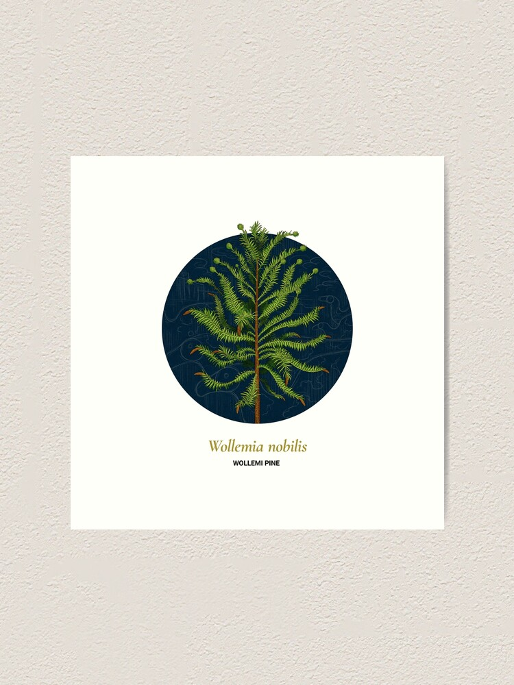 Alternate view of The Circles of Life: Wollemi Pine Art Print