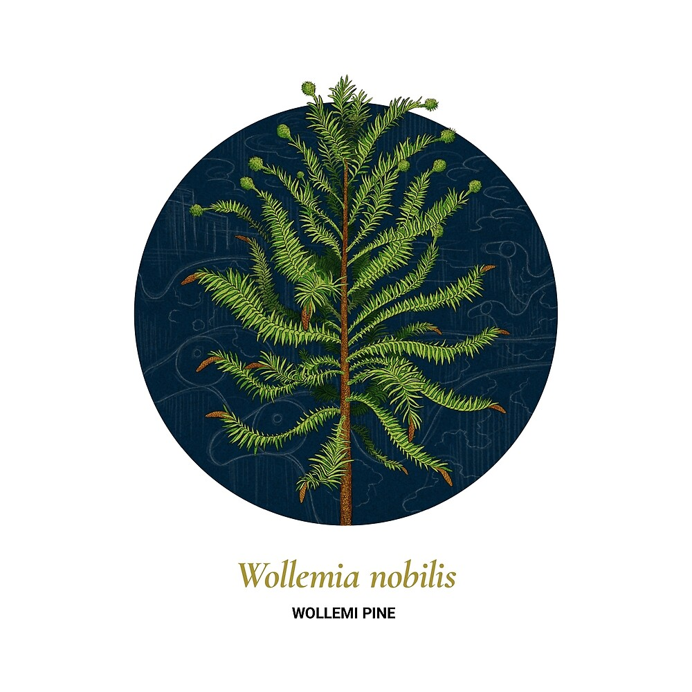The Circles of Life: Wollemi Pine by Franz Anthony