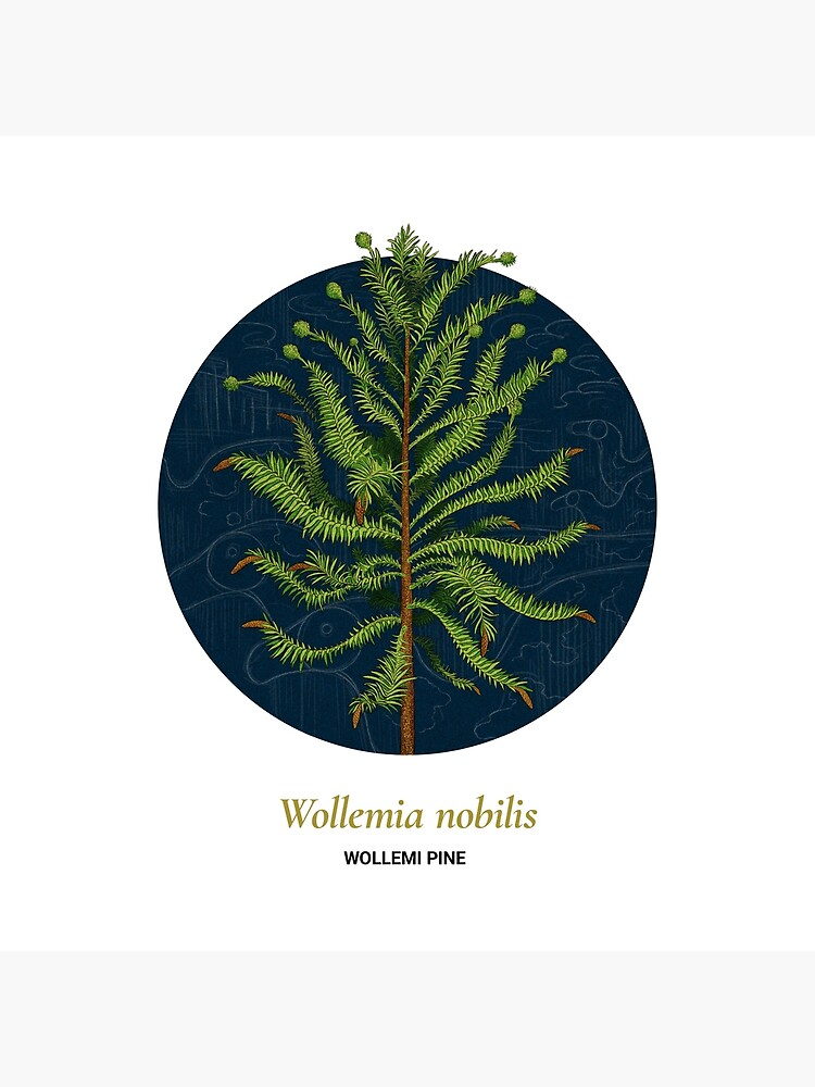 The Circles of Life: Wollemi Pine by franzanth