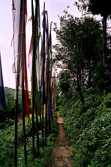 lungta, prayer flags. northenr sikkim, india by tim buckley | bodhiimages