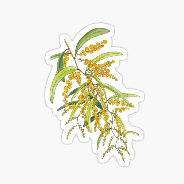 Australian Wattle Flower, Illustration Sticker