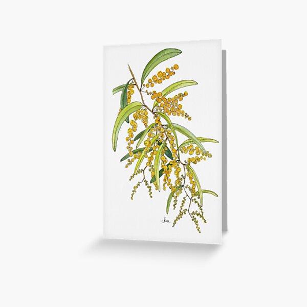 Australian Wattle Flower, Illustration Greeting Card