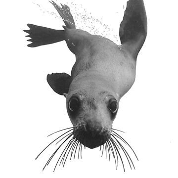 fun sea lion, seal design by Jobrien58