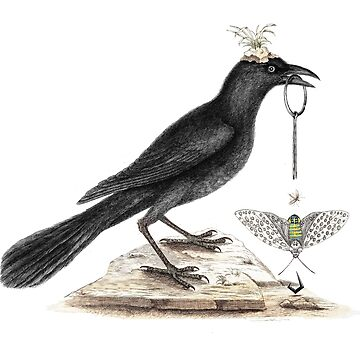 Crow pulls the pin. The darker side of nature. by rolphenstien
