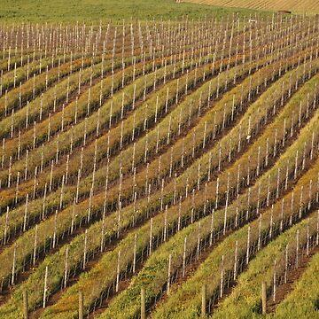Vineyard Pattern by lenzart