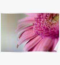 Little Pink Gerb Poster