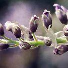 Purple Passion by Amanda White