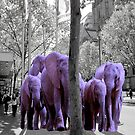 Purple guests. African invasion. by Tatyana Binovskaya