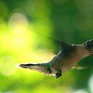 Hummingbird Views by DottieDees