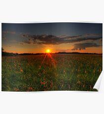 hay fields Poster