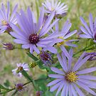 Light Purple Wildflowers by MaeBelle