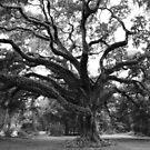 Majestic Oak by Ostar-Digital