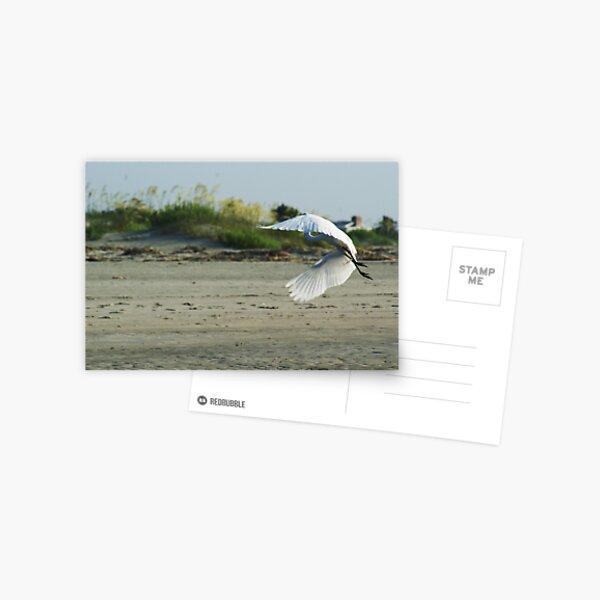 Egret in Flight Postcard