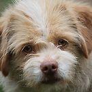 Yellow Eyed Dog by Linda Costello Hinchey