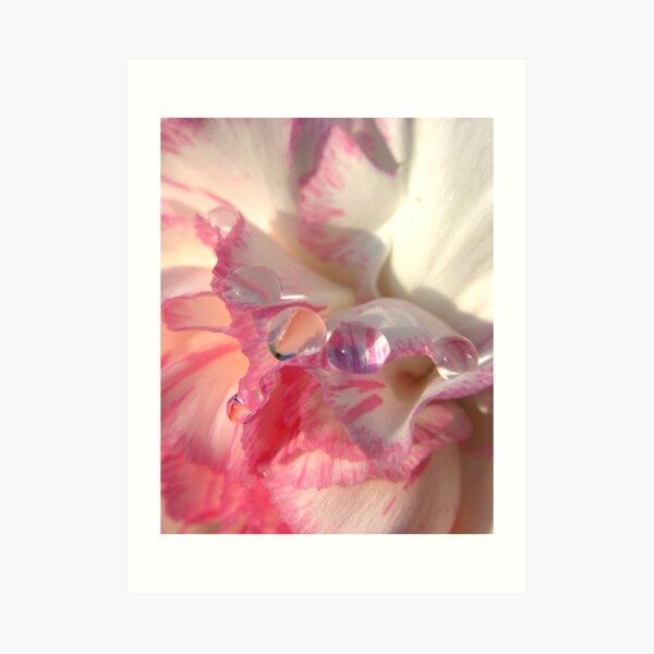 Carnation Drops II Art Print