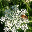 Visiting a Wild Carrot by Nadya Johnson