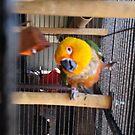 Mr. Bird by lcrescenzo