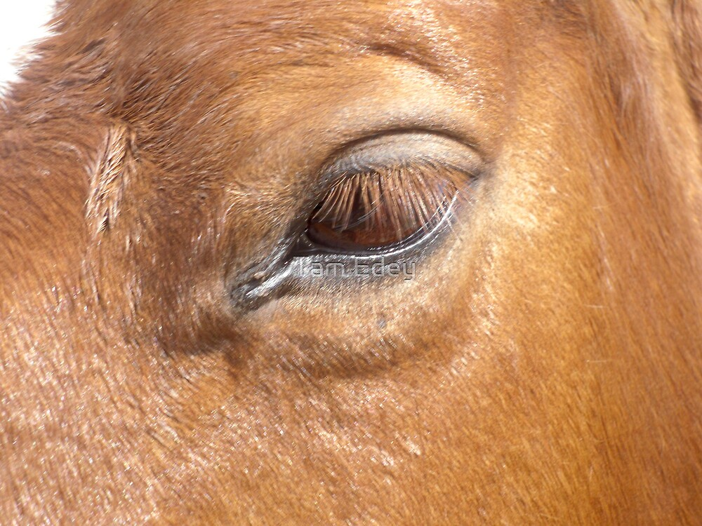 Gazing Into The Horse's Eye by Tam Edey