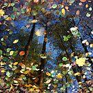 Autumns Reflection by Marcin Retecki