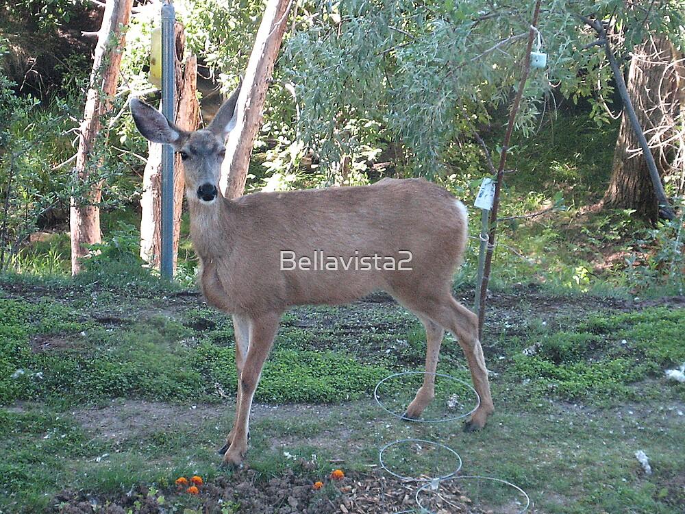 No You May Not Eat My Garden by Bellavista2