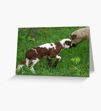 Cute Brown and White Lamb with Ewe Greeting Card