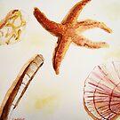 « Coquillages » par Laelart