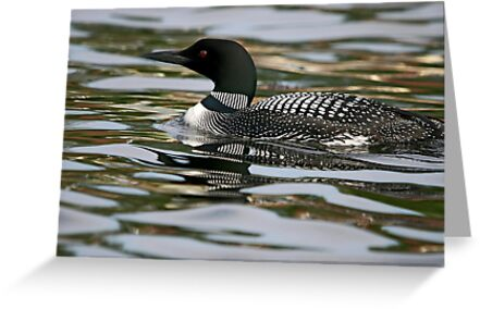 Common Loon by Vickie Emms