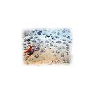 « Crevette sur champ de nodules » par Laelart