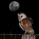 The Owl And Moon by Ian Creek