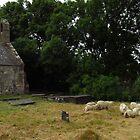 God's Flock by wiggyofipswich