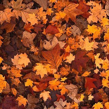 Fall foliage by Zzart