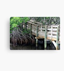 Boardwalk  Mangroves Canvas Print
